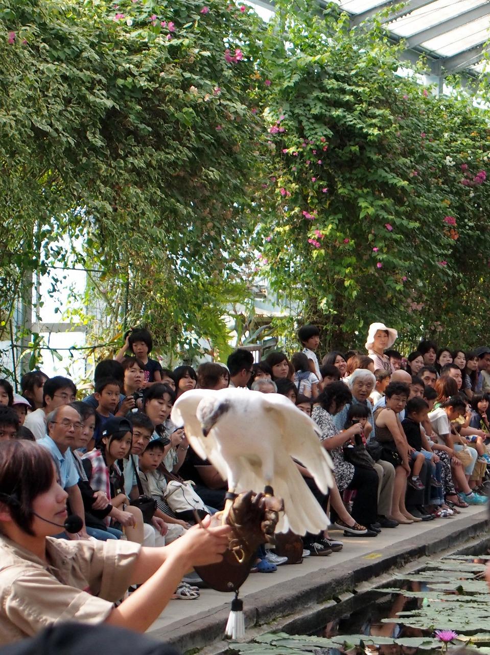 BirdShow_20140913-03.jpg