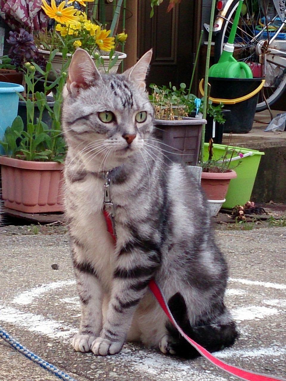 Cat-Choro_20140629-09.jpg
