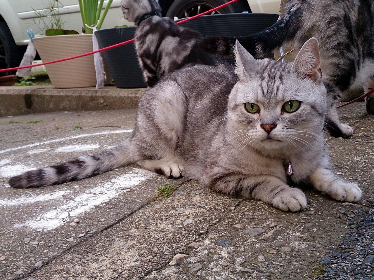 Cat-Uriel_20140629-08.jpg