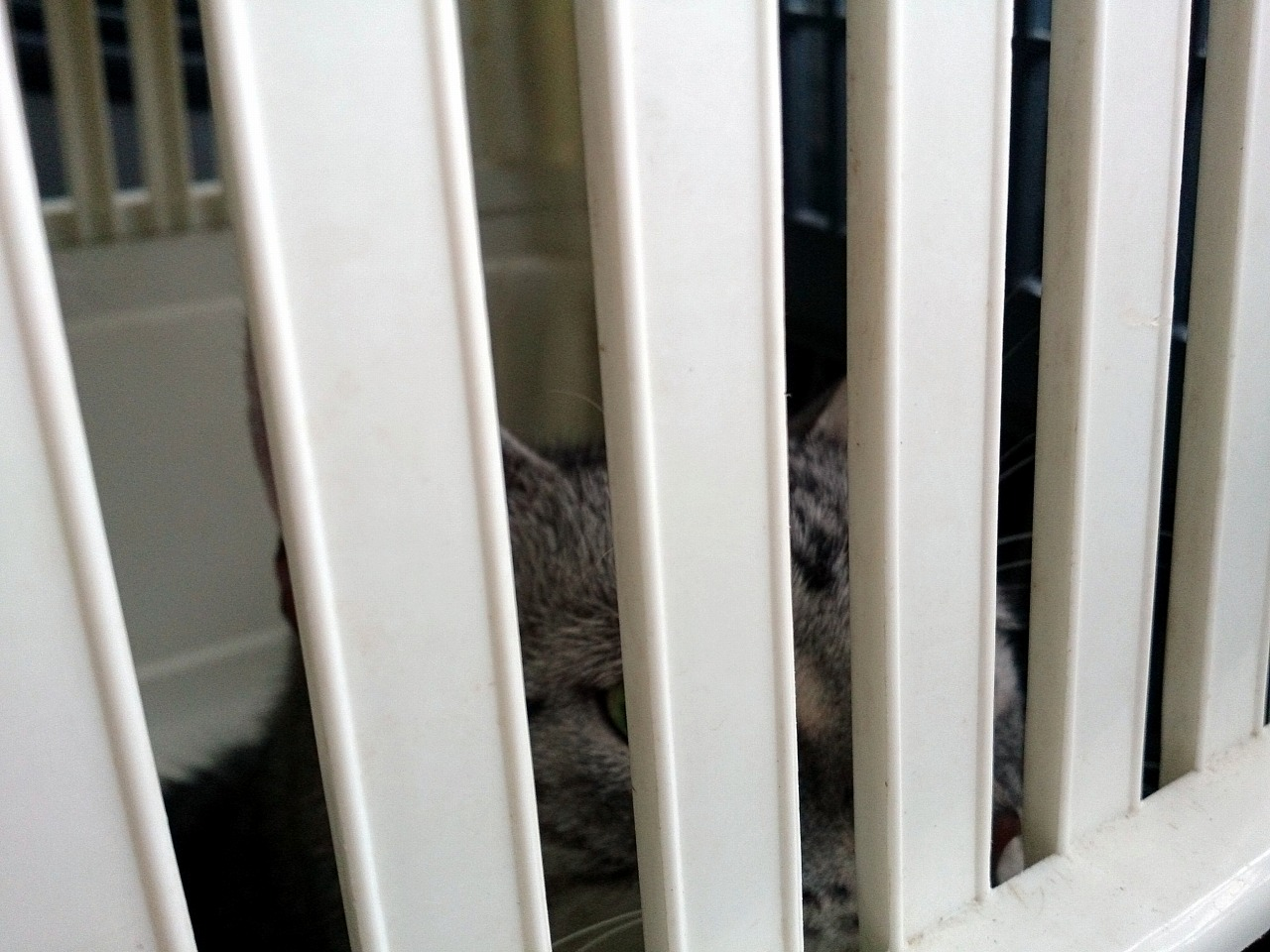 Cat_20140809-02.jpg