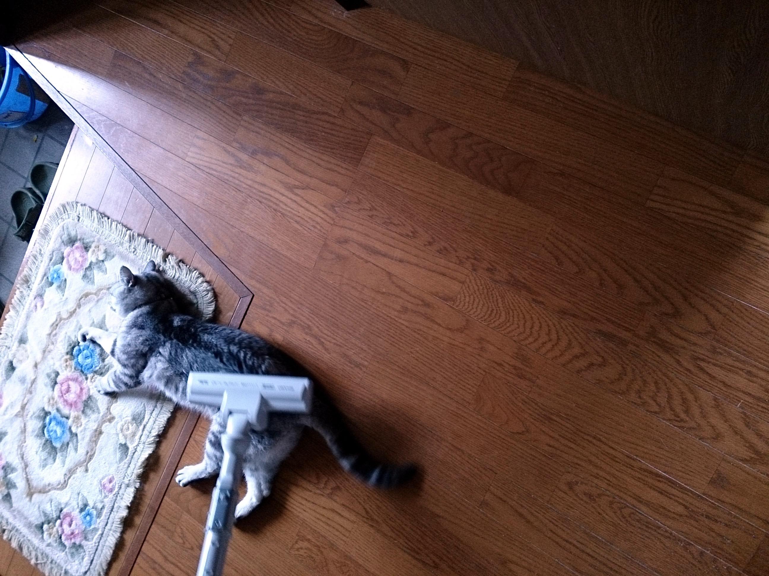 Cat_to_be_crean_20140607-02.jpg