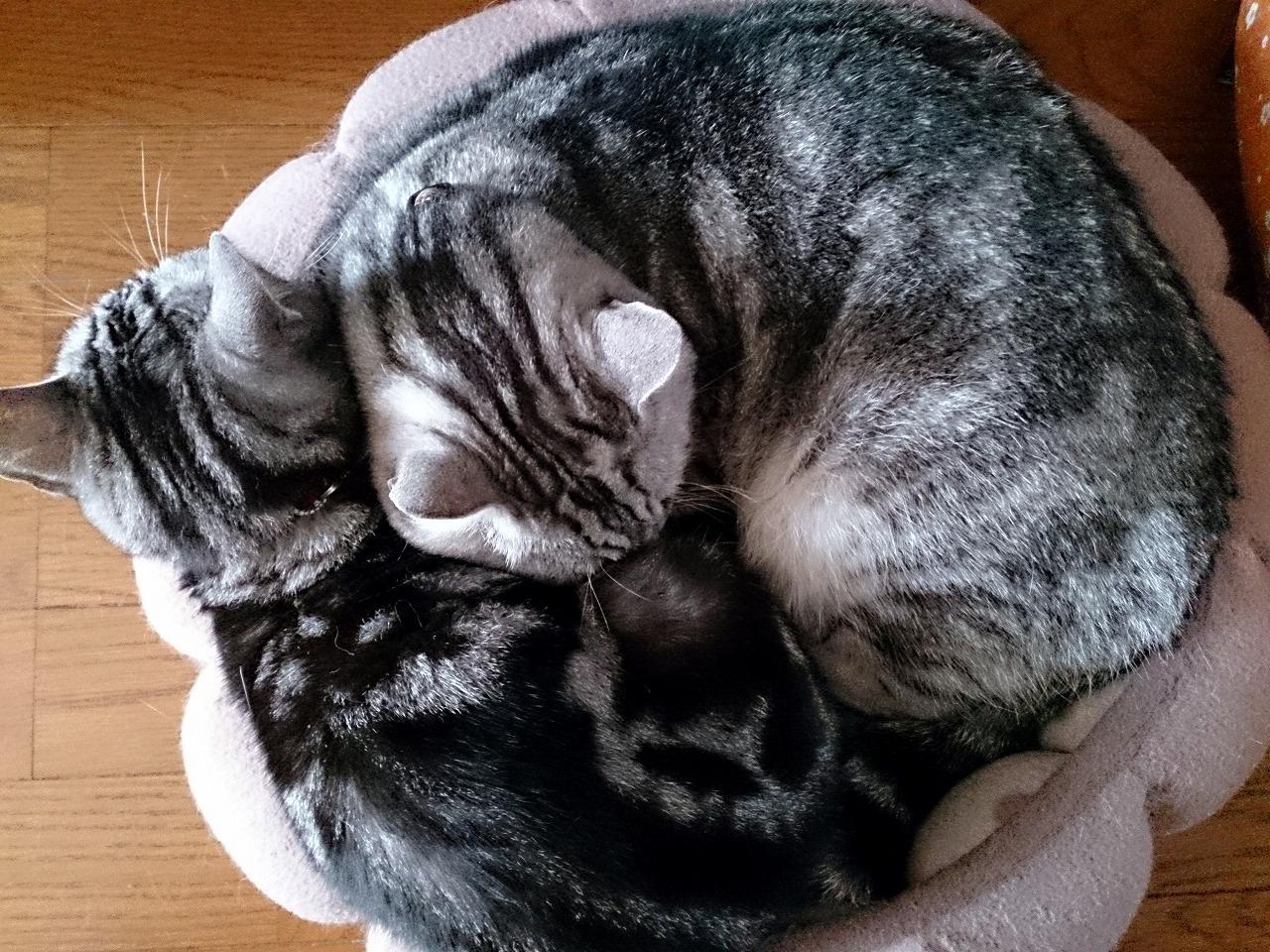 Cats_20140510-01.jpg