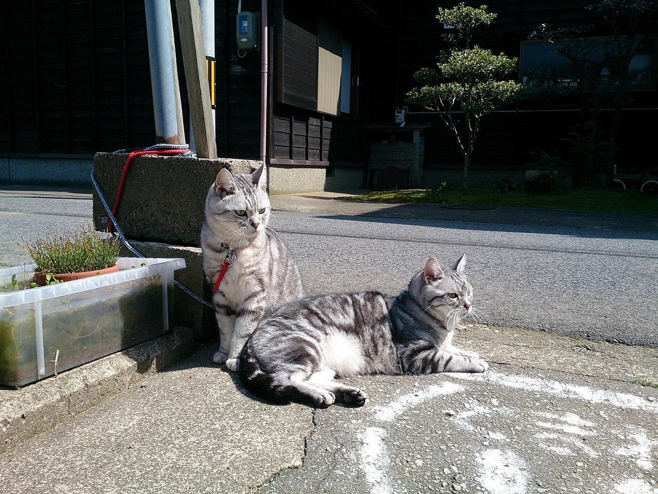 Cats_20140510-06.jpg