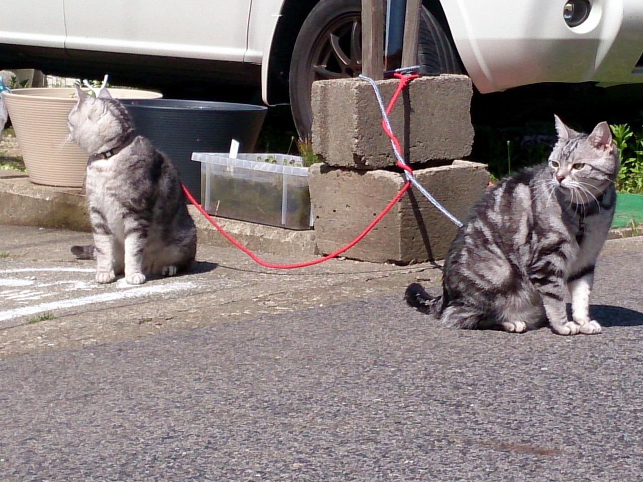 Cats_20140510-09.jpg
