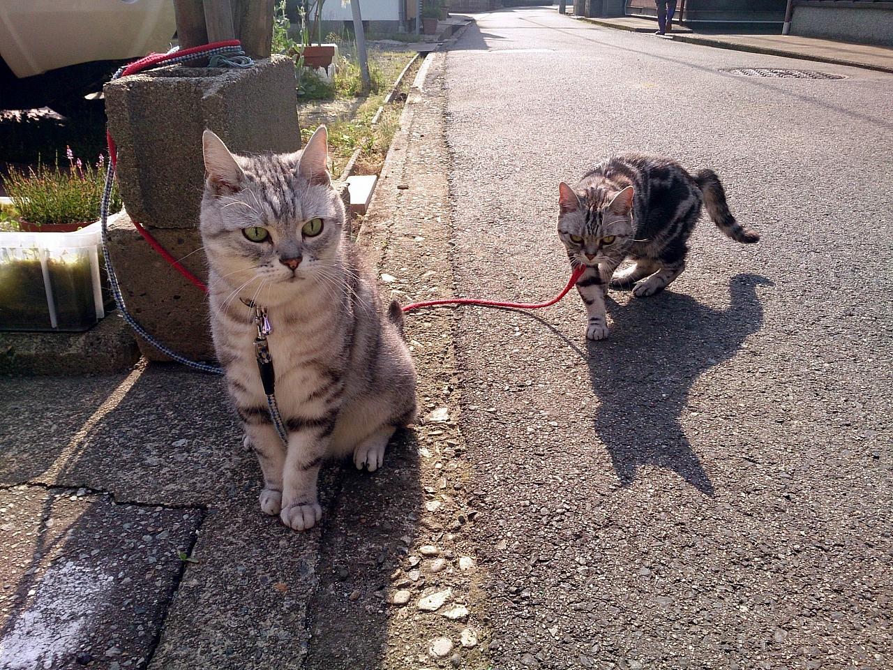 Cats_20140531-03.jpg