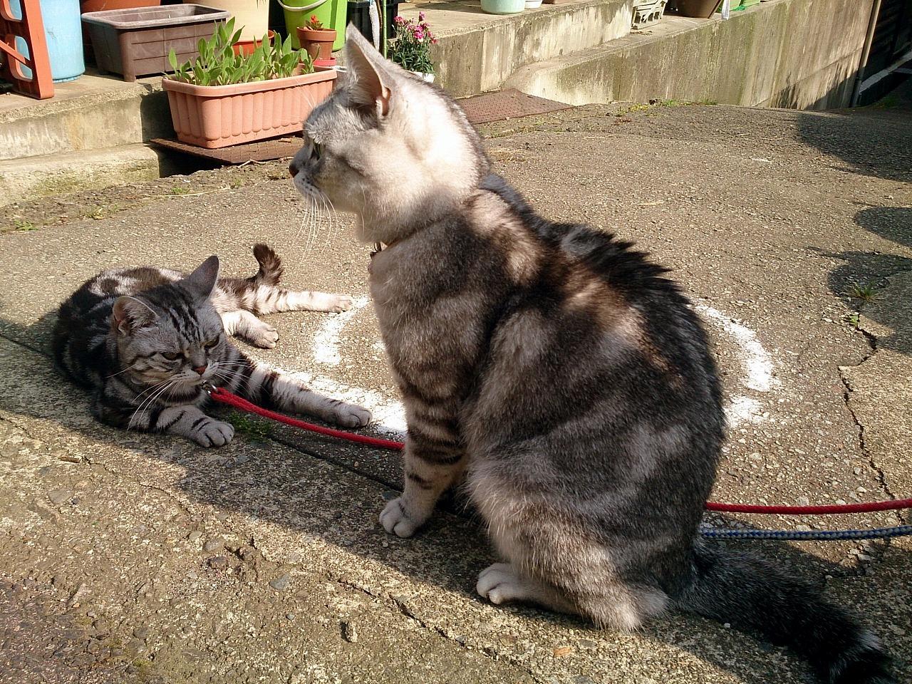 Cats_20140531-04.jpg