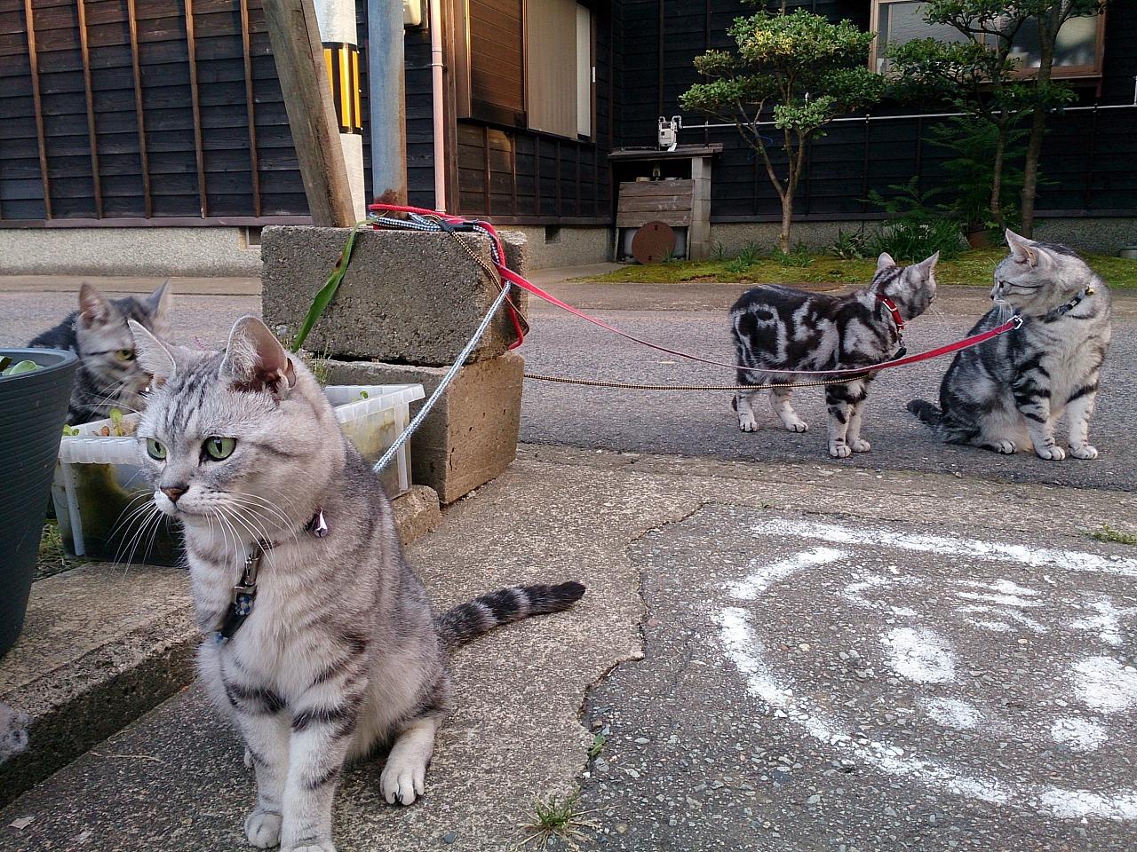 Cats_20140601-01.jpg