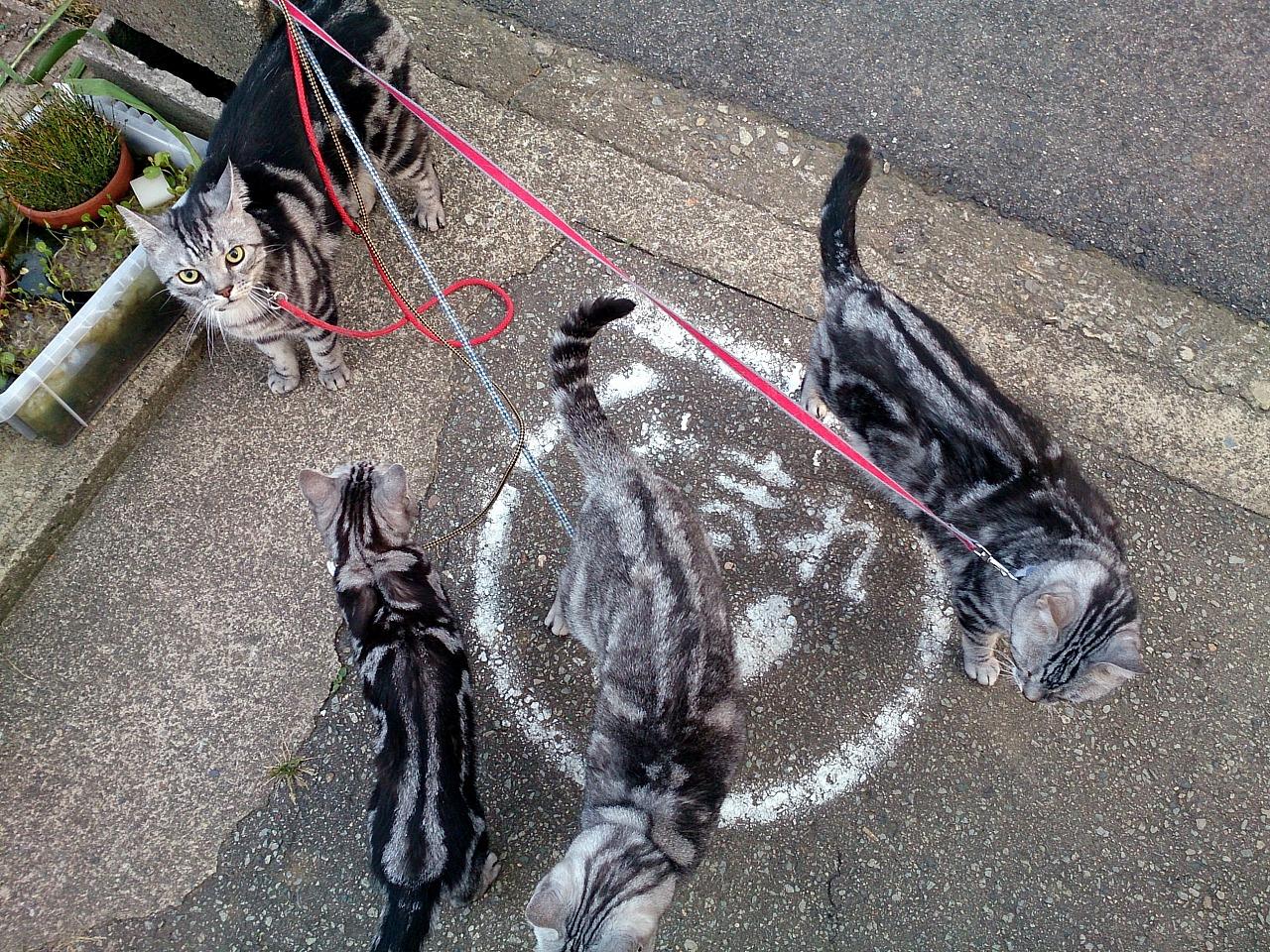 Cats_20140601-02.jpg