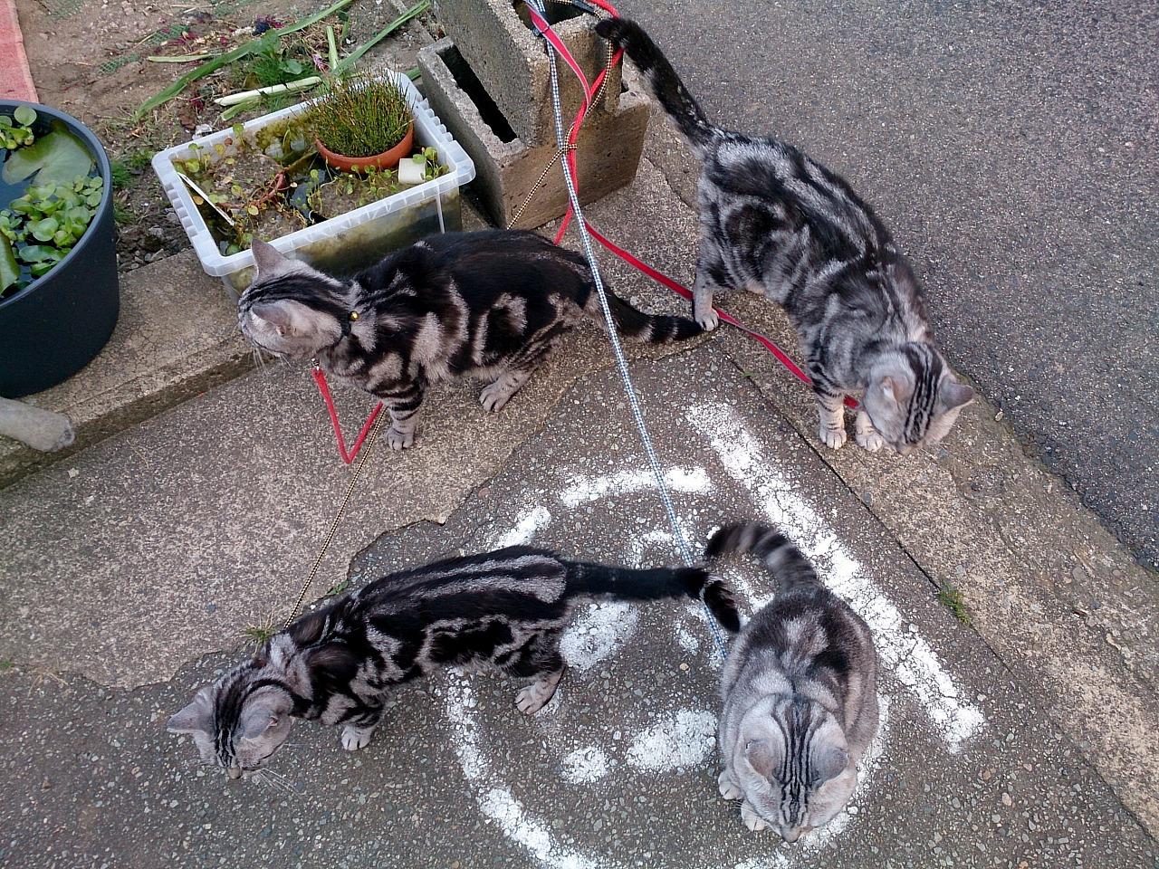 Cats_20140601-04.jpg