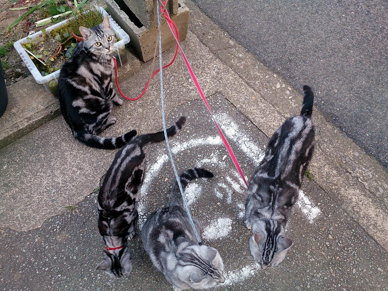 Cats_20140601-05.jpg