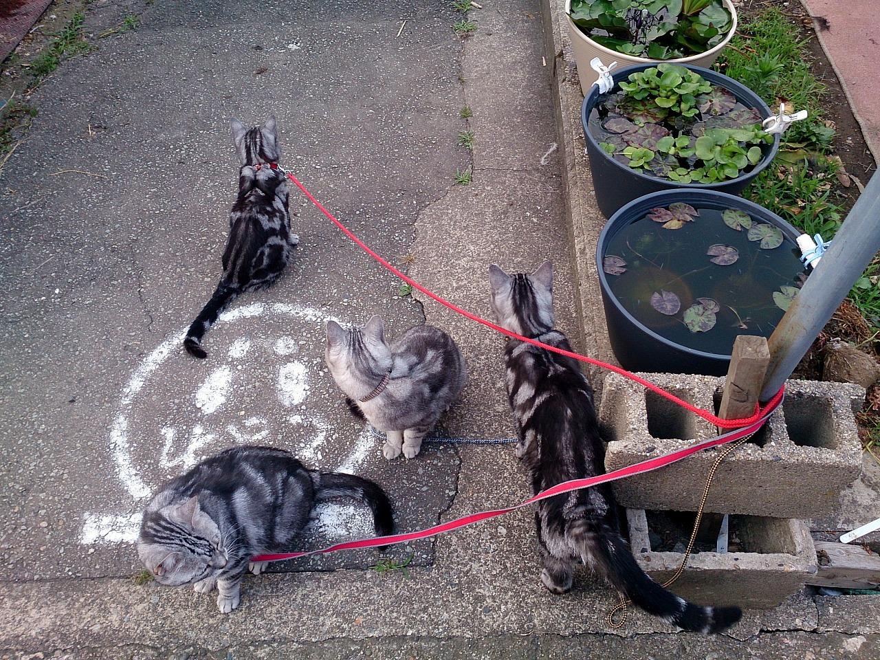 Cats_20140629-05.jpg