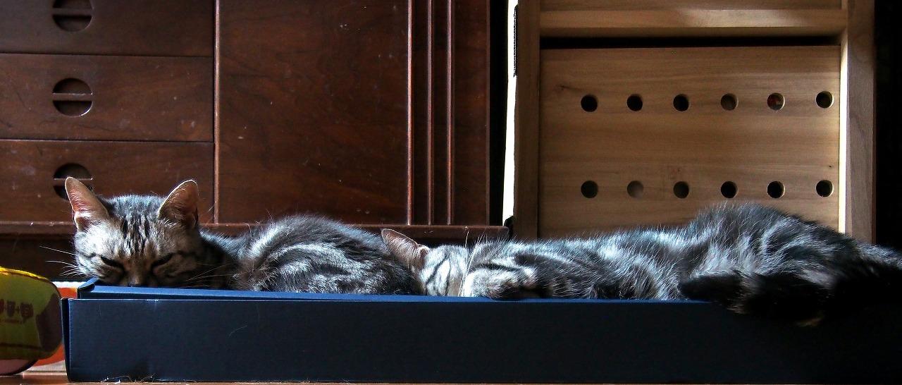 Cats_20140725-02.jpg