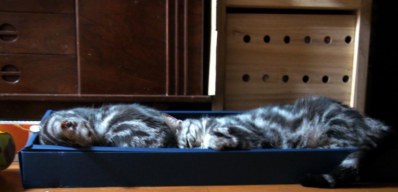 Cats_20140725-03.jpg