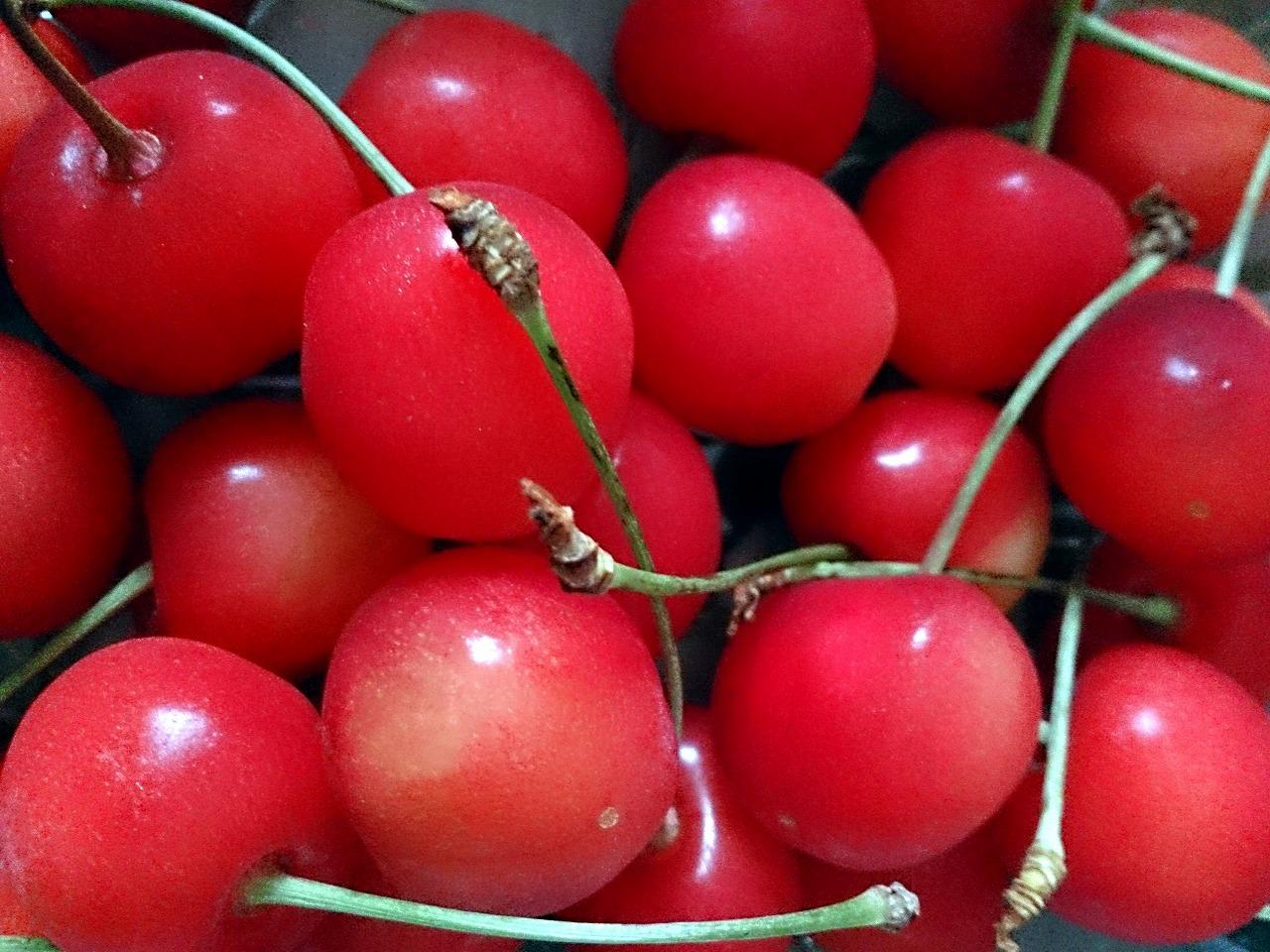 Cherry-SATONISHIKI_20140629.jpg