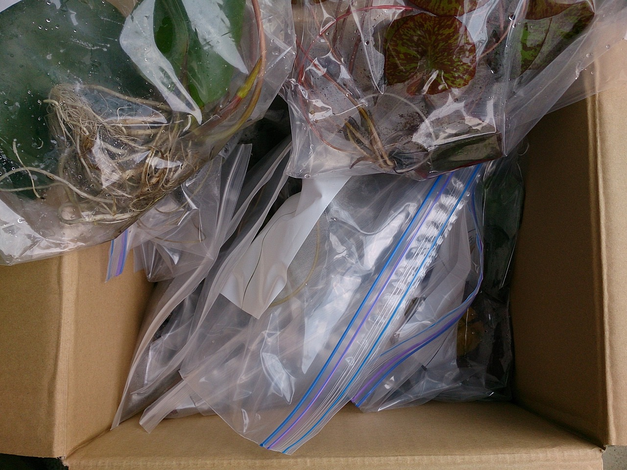 Delivery_20140615-02.jpg