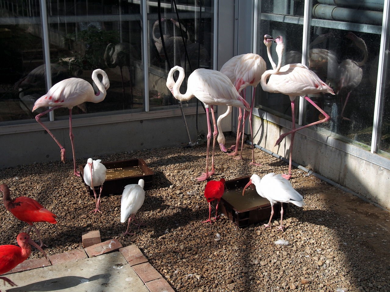 Flamingo_20140913-01.jpg