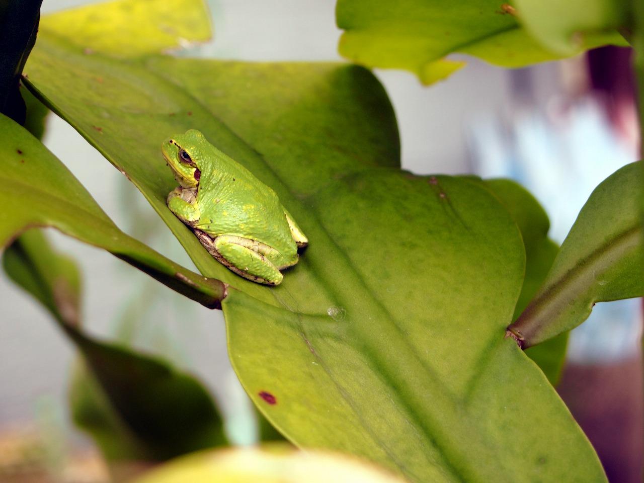 Frog_20140802-01.jpg