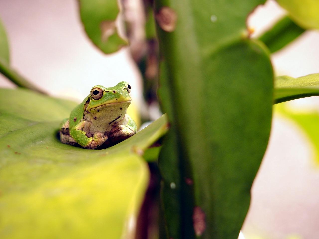Frog_20140802-05.jpg