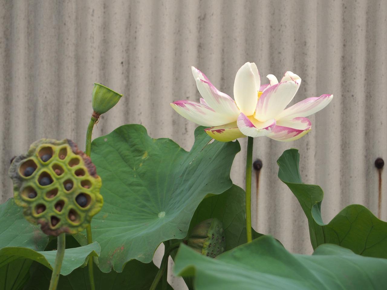 IttenShikai_20140812-01.jpg