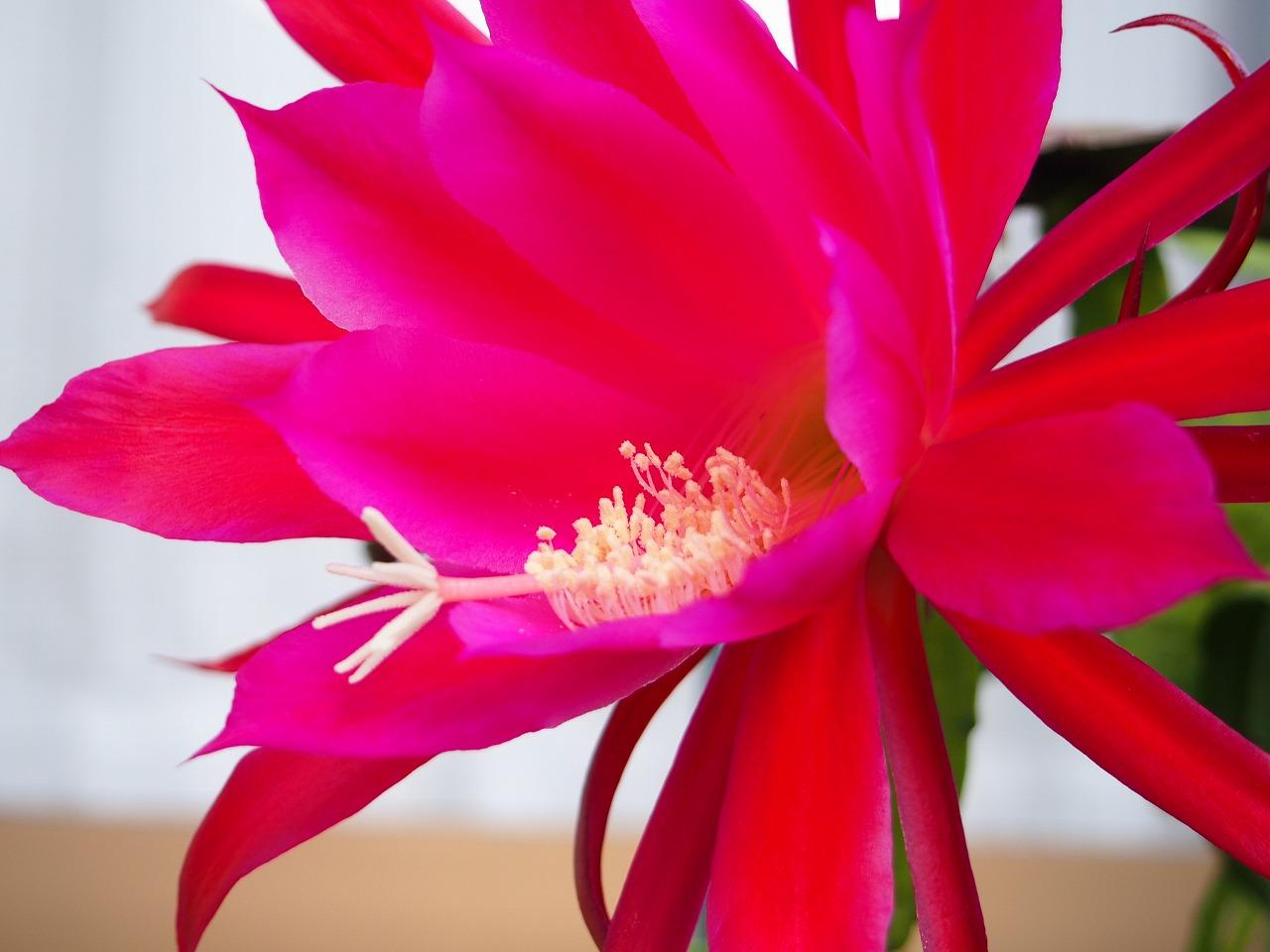 KujakuSaboten-RED_20140620-06.jpg