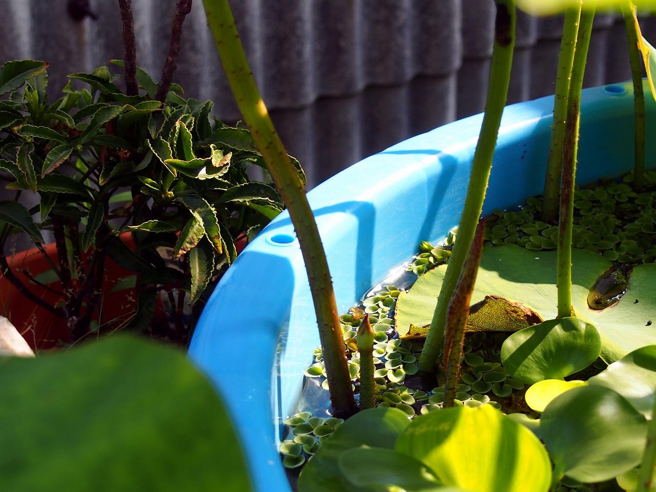 Lotus-IttenShikai_20140619-02.jpg