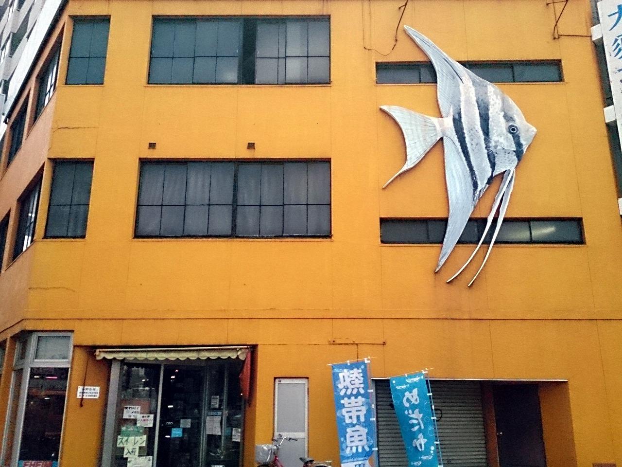 OosuFish_20140801.jpg