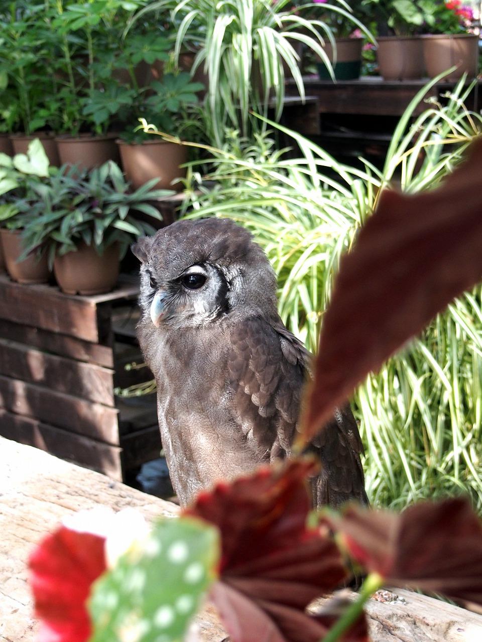 Owl_20140913-10.jpg