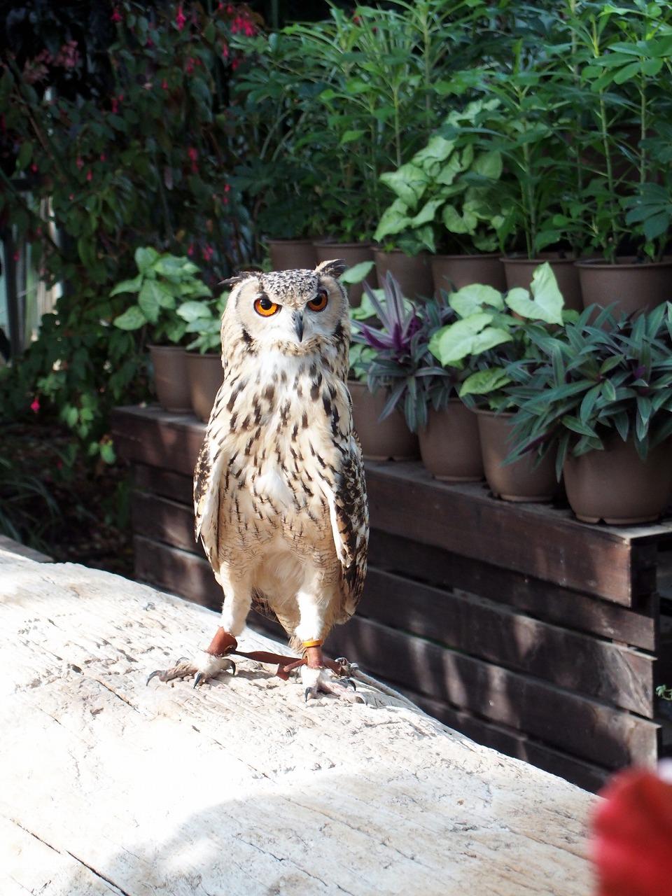 Owl_20140913-12.jpg