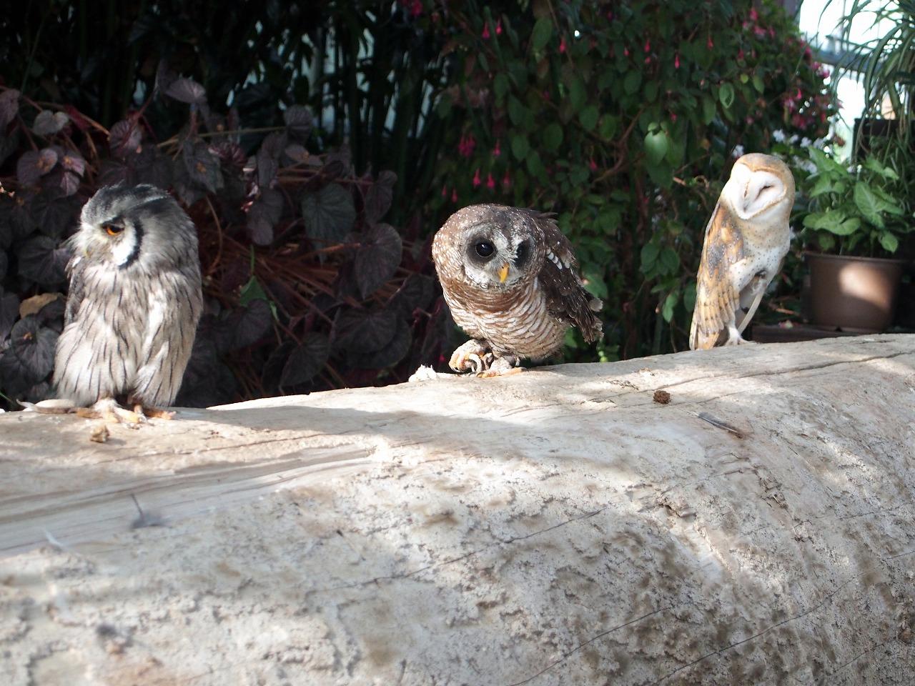 Owl_20140913-14.jpg