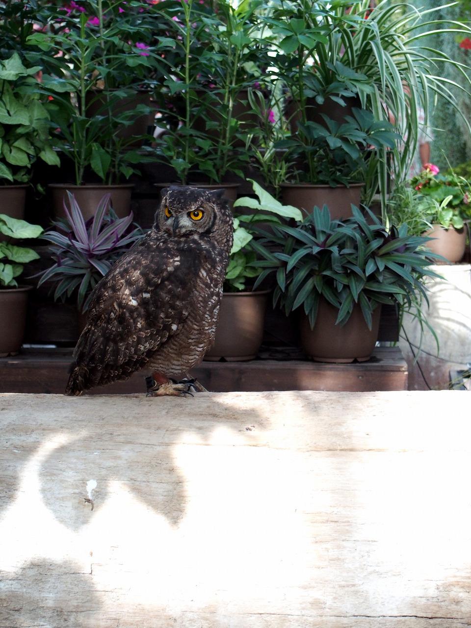 Owl_20140913-16.jpg