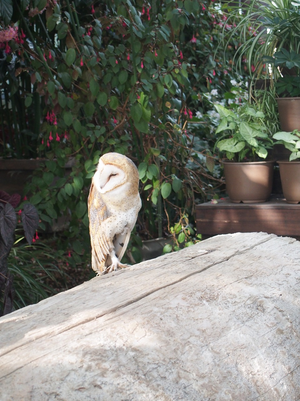 Owl_20140913-17.jpg