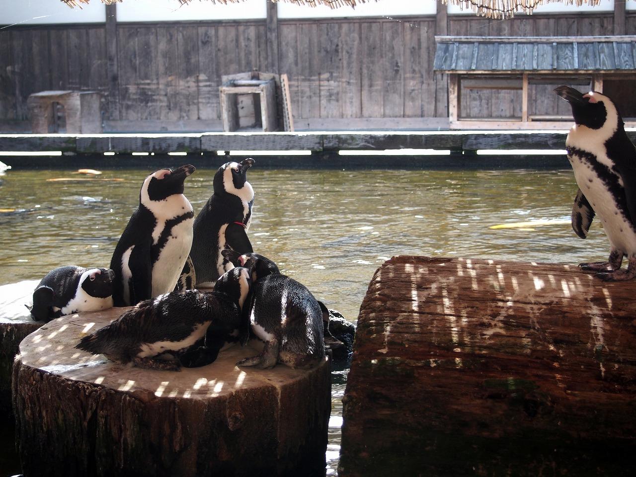 Penguin_20140913-07.jpg