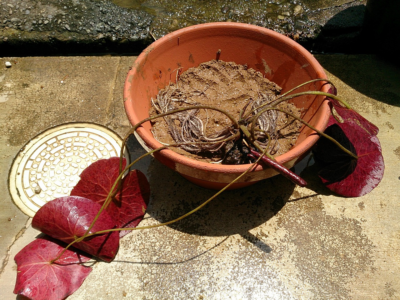 Planting-09_20140712.jpg