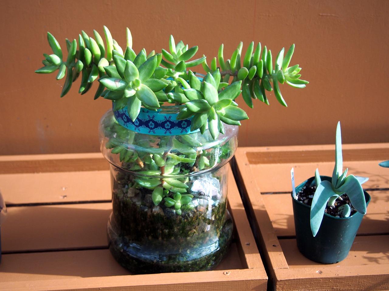 Succulent_20140913-02.jpg