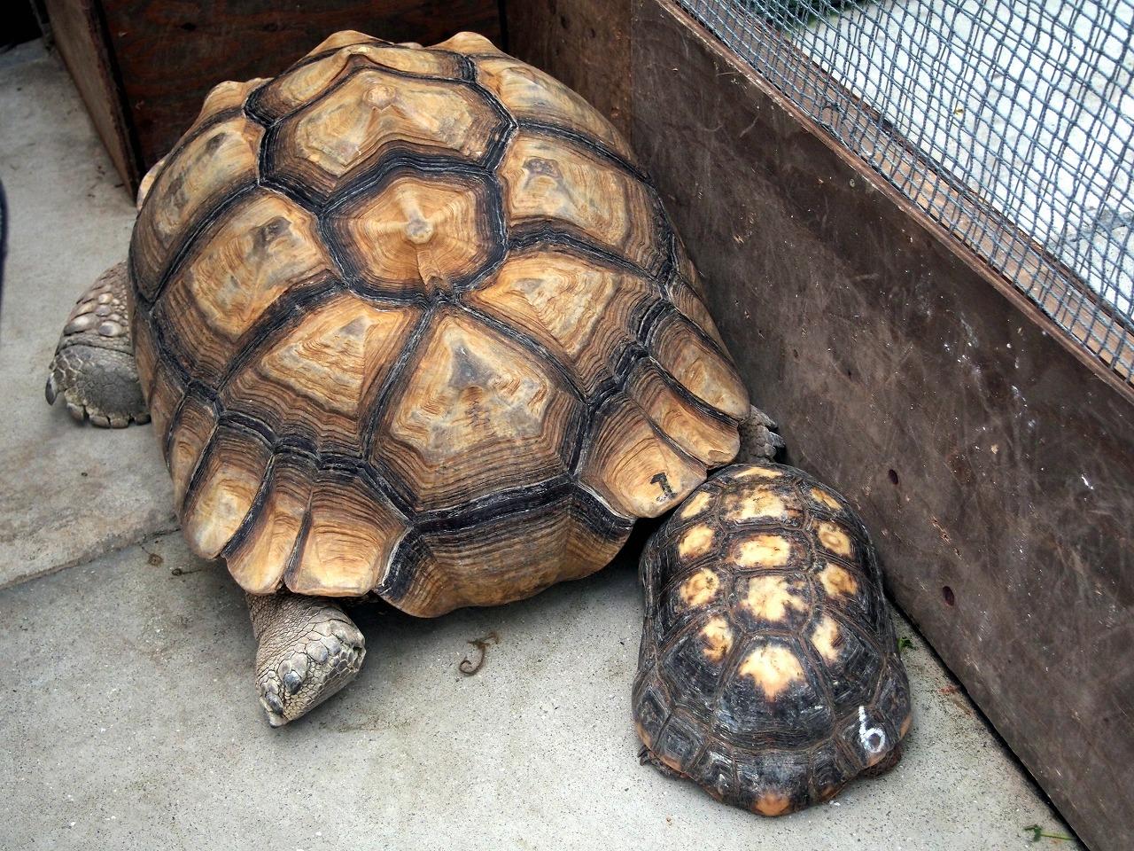 Tortoise_20140913-01.jpg