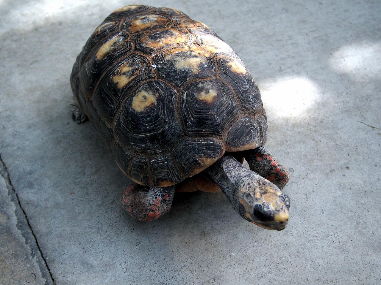 Tortoise_20140913-03.jpg