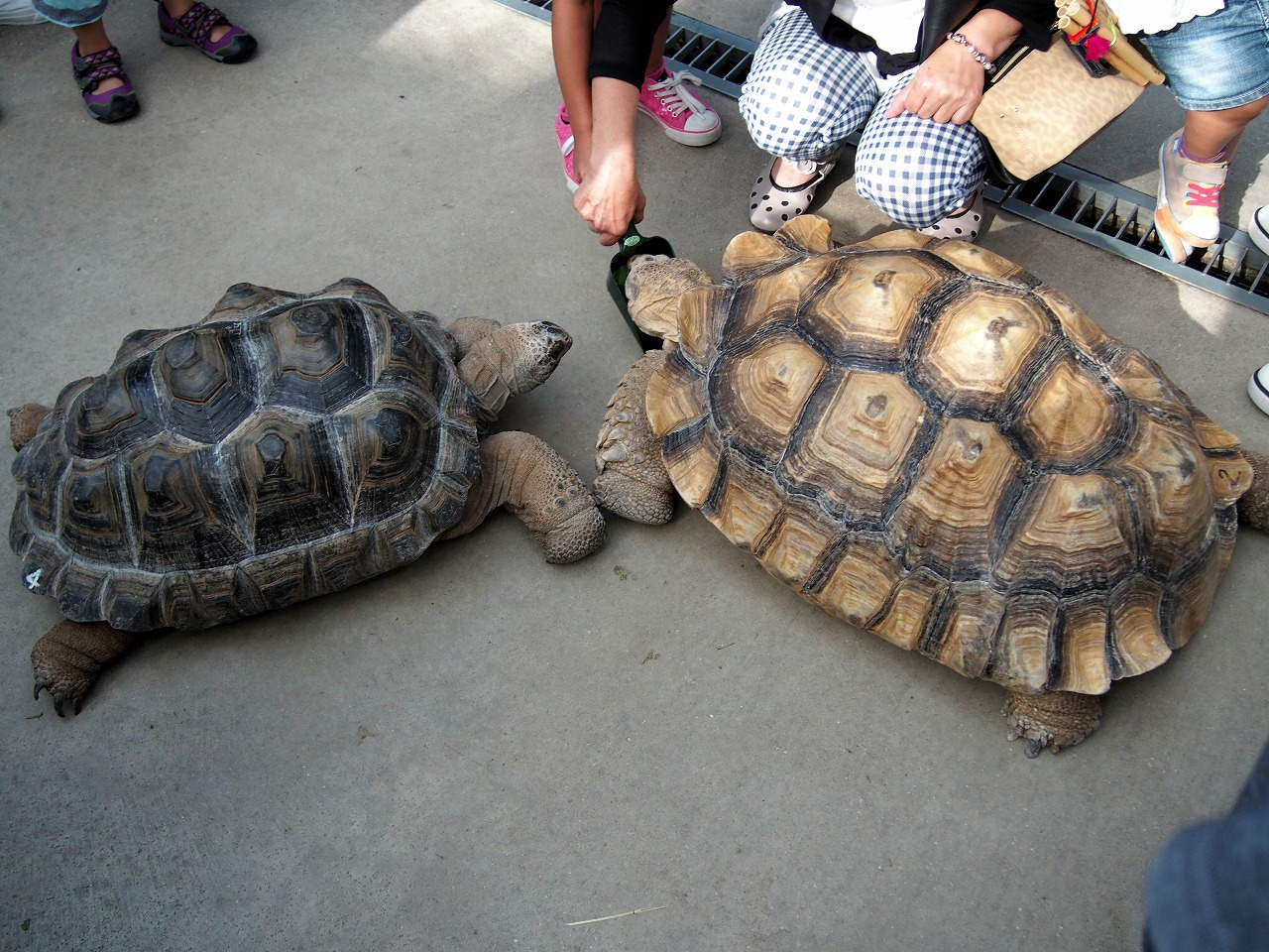 Tortoise_20140913-04.jpg