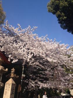 sakurasaku_convert_20140404182525.jpeg