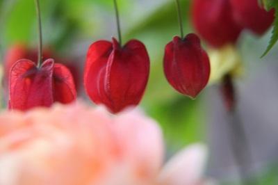 6月の花2IMG_3090