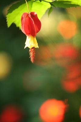 6月の花1IMG_3066