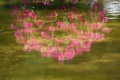 水生植物園2IMG_3105