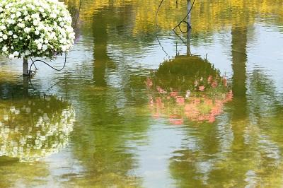 水生植物園3IMG_3100