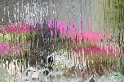 水生植物園4IMG_3099