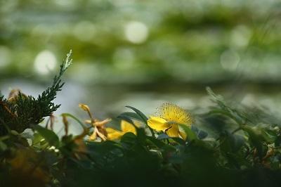 水生植物園5
