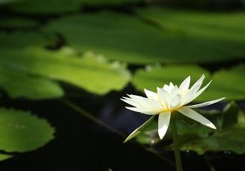 水生植物園7_3176
