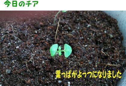 20140705-10.jpg