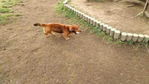 dachshund3.jpg