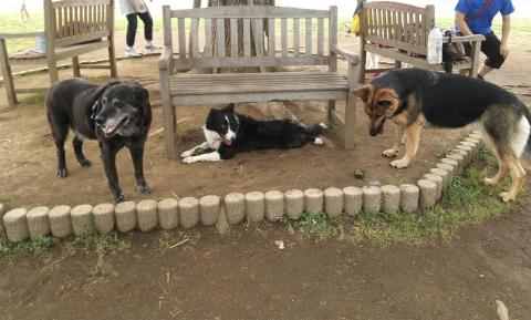 threedogs02.jpg