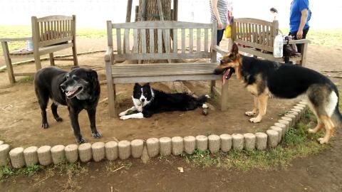 threedogs.jpg