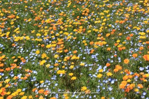 松崎のお花畑2014